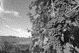 images bitmap