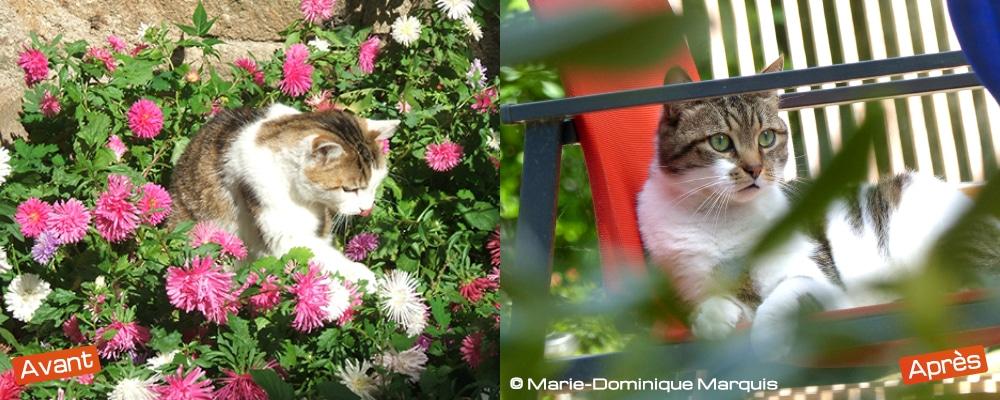 Plongée et hauteur d'oeil sur le sujet chat